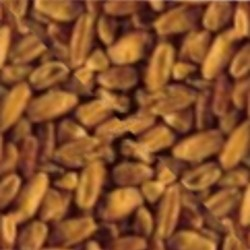 Bulgur Wheat, Whole (10 lbs)